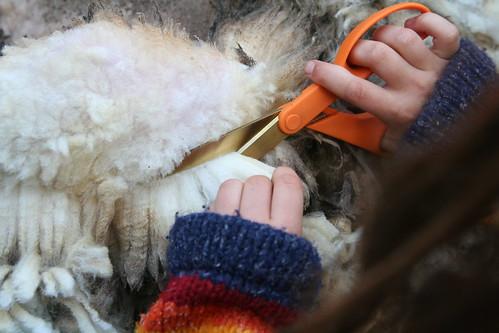 T Shearing