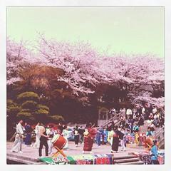 桜と大漁旗に囲まれて踊る。相馬漁業部と書かれた大漁旗も。