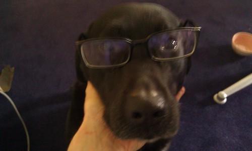 Kessie met bril