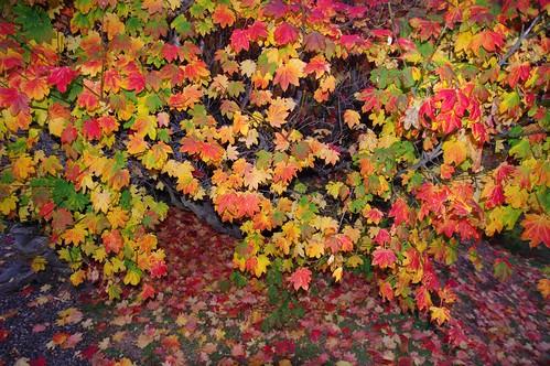 Wanaka New Zealand Autumn Colours