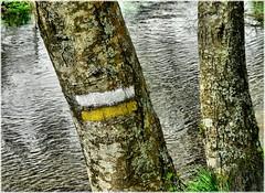 1994-Rio Mercurin en Ordes (Corua) (jl.cernadas) Tags: espaa naturaleza nature spain agua arboles natureza natur galicia galiza rios auga provinciacorua