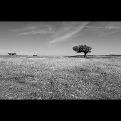 Campo Charro (Paysage Espagne)
