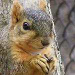 Squirrels at the University of Michigan in Spring thumbnail