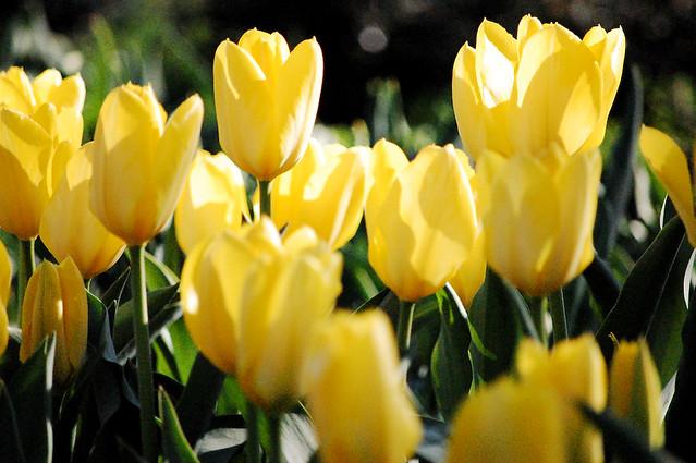 bbg spring flowers