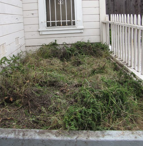front yard, after