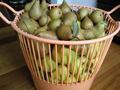 Quince and Pear Scavenging