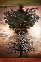 (greenseasons.) Tags: trees summer sky sun moon fall death decay changing opposites balance otw