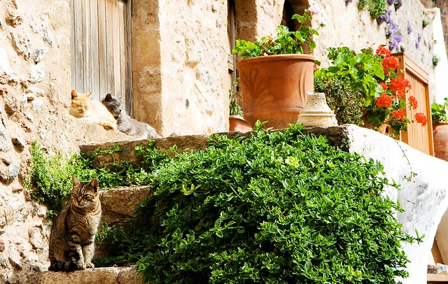 monemvasia cats