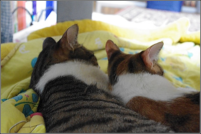 今日の猫(2011-05-03)