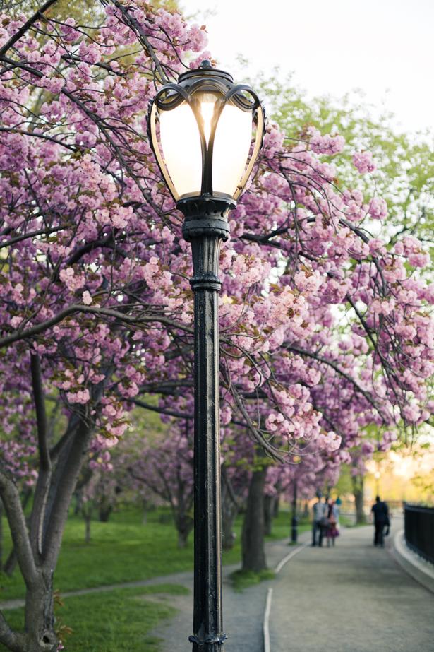 Цветущие парки - Central Park