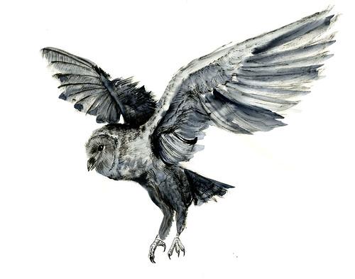 owlwc047 by jina11