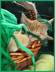 Cute Kitty Cat Kitten 'Knitting' in a Basket of Wool & Yarn in a Crafts' Home Garden Art Decor. Cute Kitty Cat Kitten 'Cross-stitching'...Kitties Cats Kittens...Cute Kitty Cat Kitten...Kitties Cats Kittens... (Chantal PhotoPix) Tags: family decorations friends light wallpaper portrait pet cats pets holiday canada color cute art wool nature beautiful beauty animal animals cat photoshop canon painting fun photography photo interestingness amazing knitting kitten feline funny colorful day basket artistic photos sweet background awesome tabby interestingness1 kitty kittens best yarn hires baskets mainecoon kitties tabbies felines lovely decor hdr cutecat cutecats homeandgarden cutekitten cutekittens homegarden mainecoons chantalc lolcats chantal777livecom