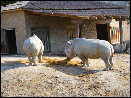 Rinocerontes en Tabernas
