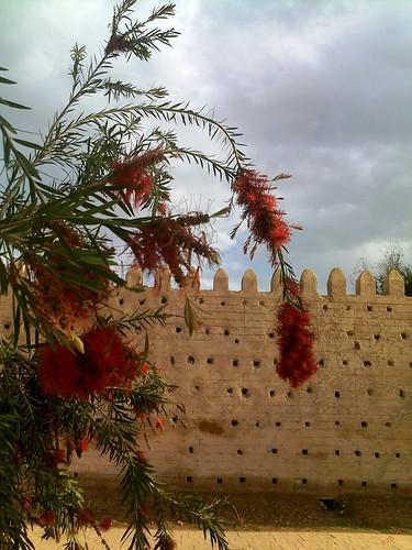 Saidia السعيدية