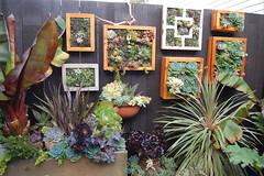 Succulent pictures (FarOutFlora) Tags: vertical garden tin valley succulents noe franchise utilitarian