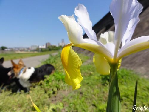 blog110522-jardin-001