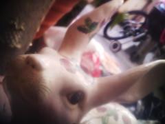 bunny (fervus) Tags: camera color digital lens toy mod quality fine ez fx vignette yashica takashi 5mp holgaesque 521 toydigital 12mp ezf521 f521