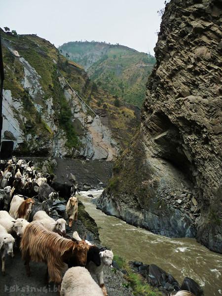 Bharmour Goat Road