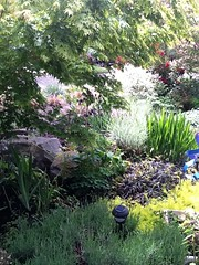 Front Garden - How To Landscape