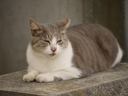 猫@三浦市
