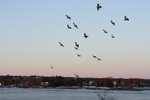 Birds on the Saint John River