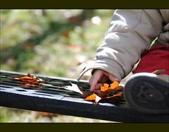 Descubro (Un rincon para compartir) Tags: hojas nikon foglia tamron 90mm feuille fulla d3000