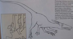 A Field Guide to Dinosaurs, 1983, Page 43