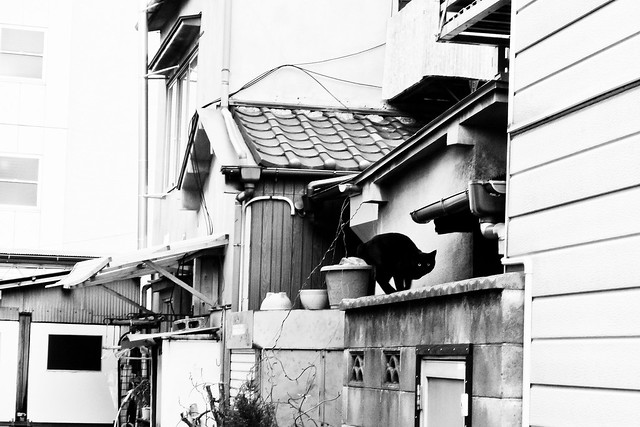 Today's Cat@2011-04-02