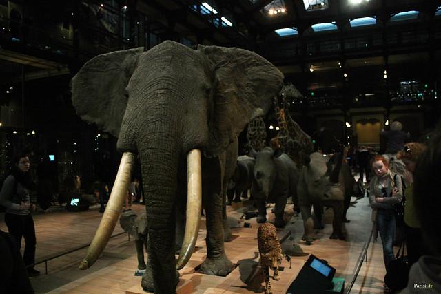 L'éléphant est impressionant