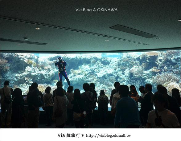 【沖繩景點】美麗海水族館~帶你欣賞美麗又浪漫的海底世界!7
