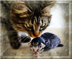 My sweet cats (Viola & Cats =^..^=) Tags: cats animals kittens felini gatti animali gattini