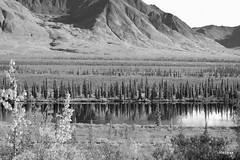 Cantwell Alaska Summit Lake (Rebeak) Tags: travel trees bw white lake black mountains nature water alaska reflections landscape valley wilderness tundra cantwell railroadtracks rebeak mygearandme