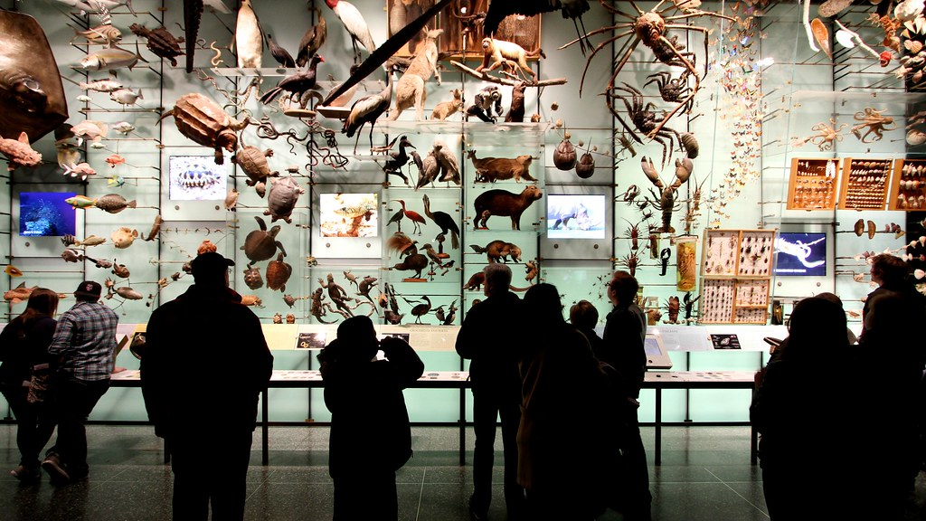 Wall of Animalia