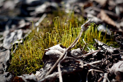 Droid Sprouts... (Scorchez) Tags: toronto ontario canada leaves forest scarborough bluffs twigs nikon50mmf18