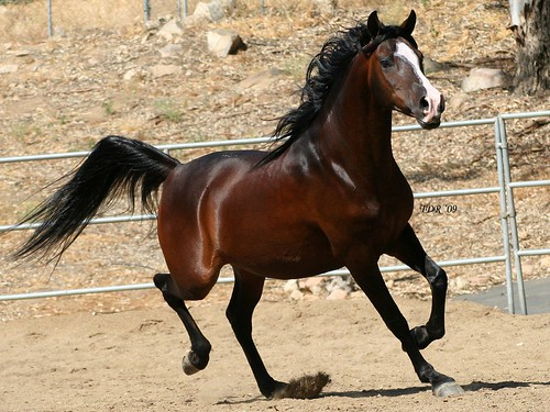 horses wallpaper horse backgrounds. High Quality Horse wallpapers