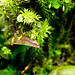 Cool vivarium closeups