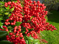 Best viewed with direct sunlight (DavidK-Oregon) Tags: oregon beautifulcapture everydayissunday