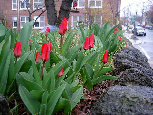 DC's Mount pleasant neighborhood (by: Christina Bejarano, creative commons license)
