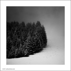 Trees in the Mist (Ian Bramham) Tags: trees winter blackandwhite bw mist mountain snow alps landscape photography photo nikon image fineart photograph 70300vr d700 ianbramham