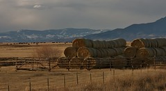 Montana...Hay and Cattle (DJ MacTrucker) Tags: ranch cow montana cattle cows farm farming round hay bales bale ranching rotoballe spanishforkandnogales