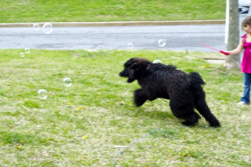 Charlie chasing Bubbles