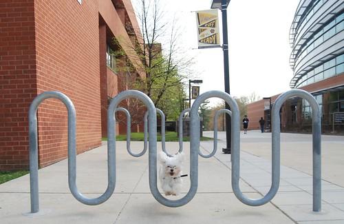 Bike Rack Jump