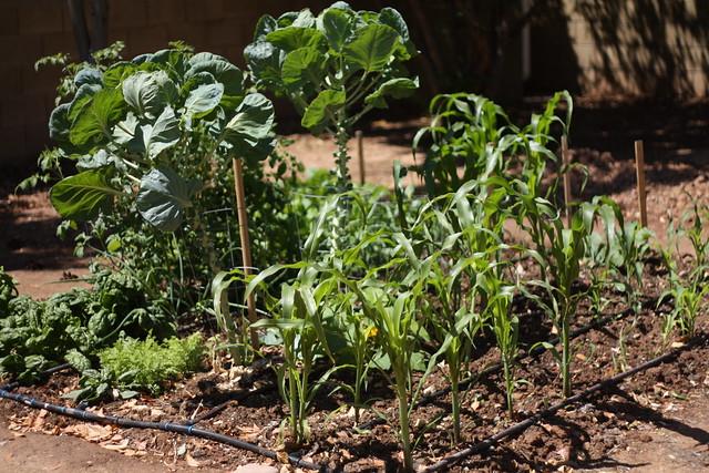 Dad's garden (14)