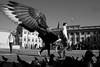 (Donato Buccella / sibemolle) Tags: street blackandwhite bw italy man milan birds fly milano pigeons streetphotography takingflight birdman palazzoreale piccioni piazzaduomo icaro uomouccello mg4325 sibemolle
