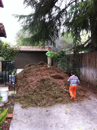 Didn't take long for Ezra to climb the mulch pile