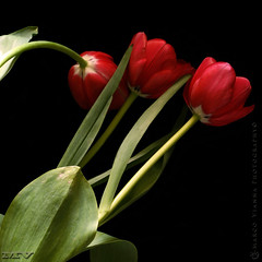 Damas de Rojo (m@®©ãǿ►ðȅtǭǹȁðǿr◄©) Tags: barcelona flowers españa flores canon tulips tulipas catalunya tulipanes ripollet canoneos400ddigital m®©ãǿ►ðȅtǭǹȁðǿr◄© florart damasderojo marcovianna canonef28÷80mmf3556