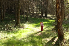LUTIN (bassapower) Tags: france green nature beautiful kids forest soft colours magic lutin deepinthewoods tyralune bassapower