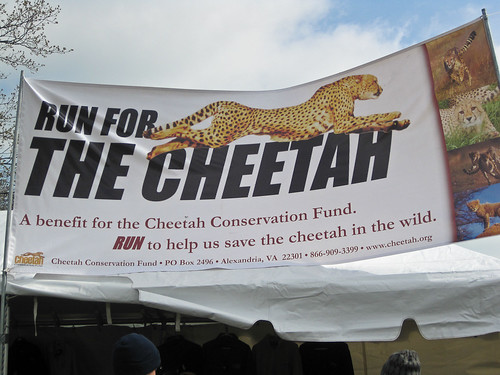 Run for the Cheetah