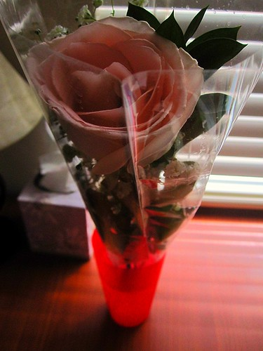 My Rose From Tim