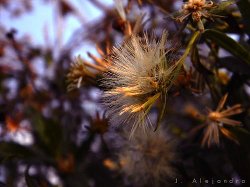 Violet Blur by AlexMuñoz